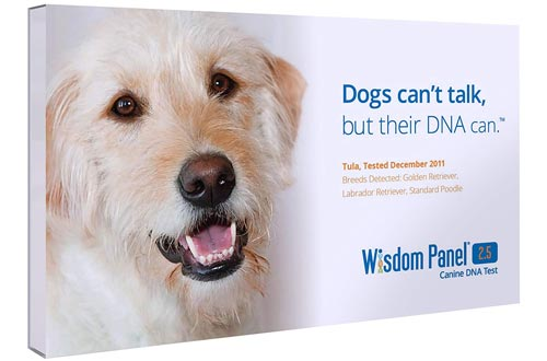 Mars Veterinary Wisdom Panel 2.5 Breed Identification DNA Test Kit