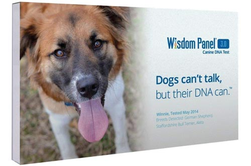 Mars Veterinary Wisdom Panel 3.0 Breed Identification DNA Test Kit