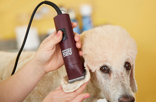 Andis UltraEdge Detachable Blade Clipper - Professional Animal Grooming Clipper