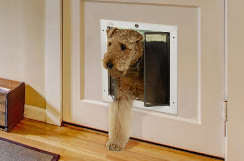 Plexidor Weatherproof Locking Dog Doors with Steel Security Panel