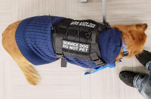 Motusamare Hunting & Training Service Dog Vest