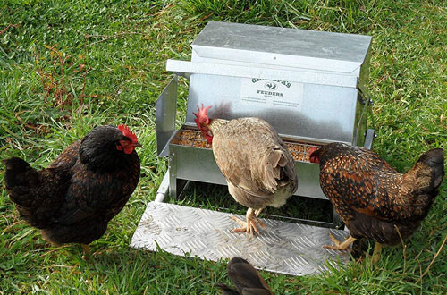 Automatic Chicken Feeders