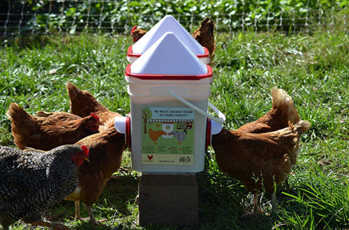 RentACoop Automatic Chicken Feeders