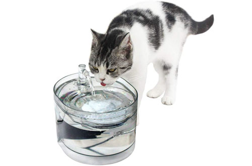 NPET Cat & Doggie Pet Water Fountains