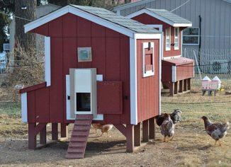 RentACoopIndoor/OutdoorBattery PoweredAutomatic Chicken Doors